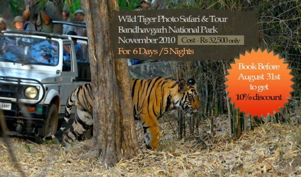 Wild Tiger tour bandhavgarh november