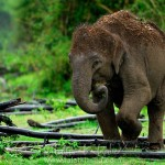 Elephant Baby - Kabini Backwaters