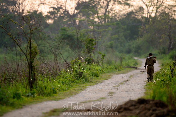 Forest guard walking kaziranga