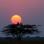 Sunset at Velavadar