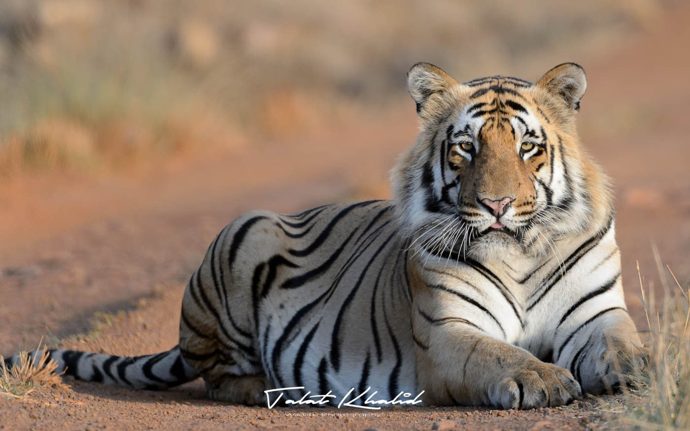 tiger king - photo #27